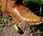 Fire Ant Boots
